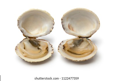 Pair of fresh raw open warty venus clams isolated on white background