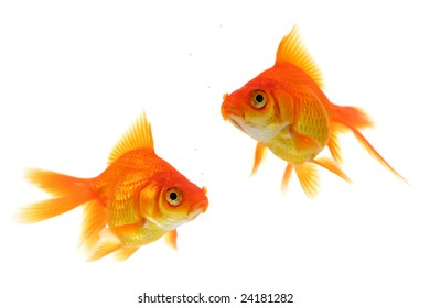 Pair of goldfish with air bubbles isolated on a perfect white background