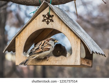 A pair of gray and brown sparrows eats in an old yellow bird and squirrel feeder house from plywood in the park
