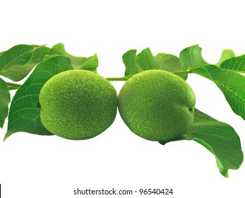 A pair of green unripe walnuts. On a white background.