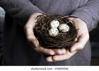 A pair of hands holding a nest with three eggs.