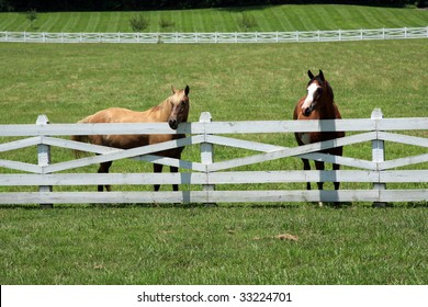 A pair of healthy horses in a pasture looking over the fence