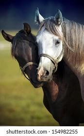 A pair of horses