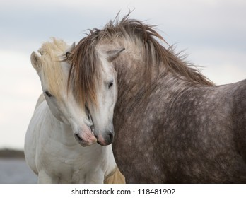 A pair of horses kissing with their heads leaning on one another