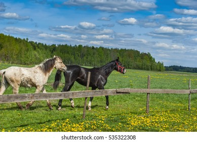 a pair of horses playing on the meadow
