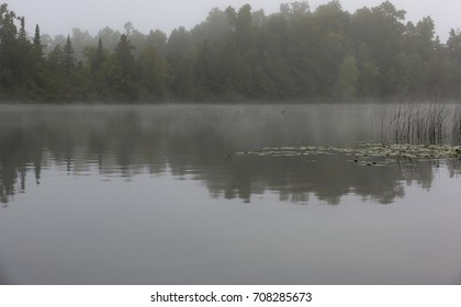 A pair of lake loons glide silently through a bay and past reeds on a very foggy morning on a Minnesota lake.