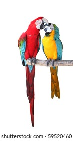 "Pair of ""lovebirds"" Isolated over white. Clipping path included."