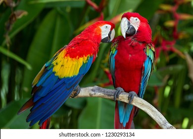 A pair of macaw parrots on a branch