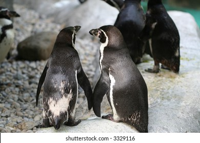 Pair of penguins that appear to be holding hands ... very cute