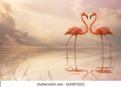 A pair of pink flamingos making a heart shape in reflection pond. Love concept.
