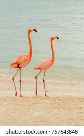 A pair of pink flamingos on a tropical beach