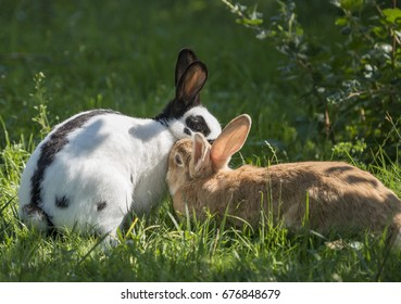 a pair of rabbits in the garden