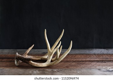 A pair of real white tail deer antlers over a rustic wooden table against a black background used by hunters when hunting to rattle in other large bucks. Free space for text.