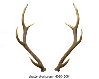 Deer Antlers Images, Stock Photos & Vectors | Shutterstock