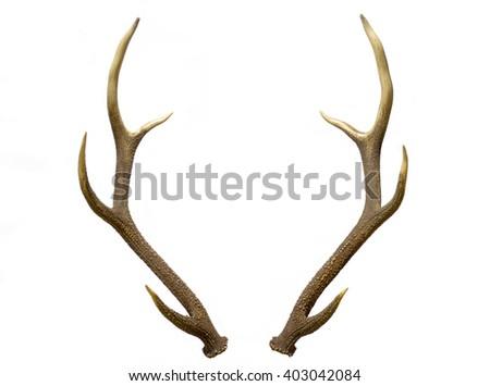 pair red deer antlers on white stock photo edit now 403042084