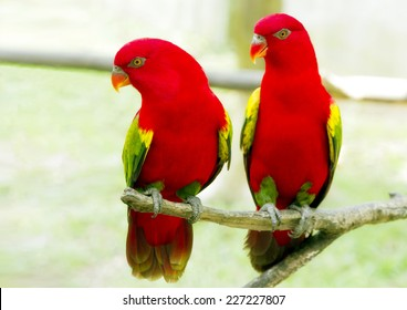 A pair of red parrot with green wings / A pair of red parrot with green wings in Kuala Lumpur Bird Park