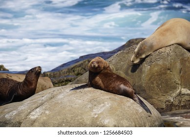 A pair of Sea Lions playing at the ocean sands of the beach on the California Coast