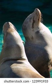 A pair of Sea Lions sunning themselves