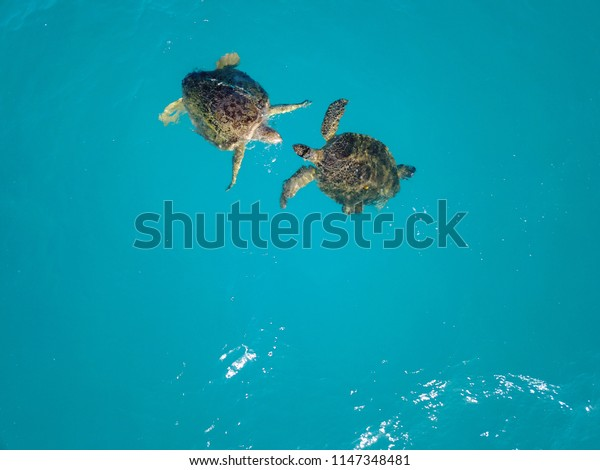 Pair Of Sea Turtles From Drone