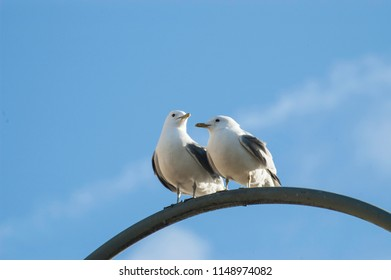 A pair of seagulls sit together