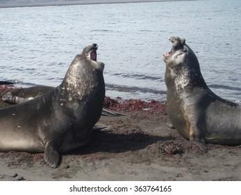 Pair of seals.