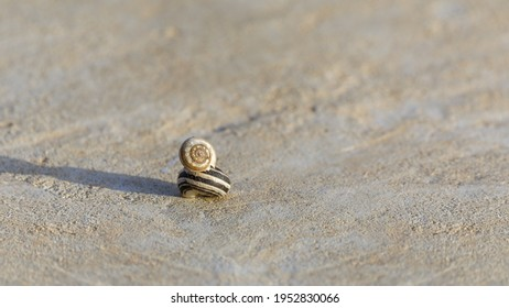 A pair of snails sitting one on top of the other on a stone at sunny morning