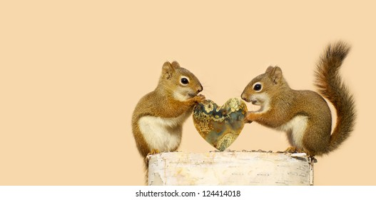 Pair of squirrels with the male giving the female a special heart shaped stone for Valentine's Day.