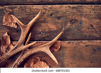 A pair of stag antlers with fallen brown winter leaves on an old, rustic wood plank background.
