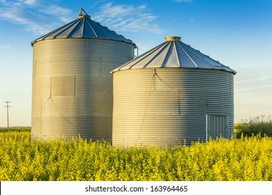 A pair of steel grain bins sit in a field of ripe yellow canola