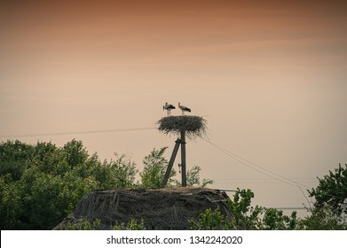 pair of storks in the nest on the sky background. Summer season. Habitat.