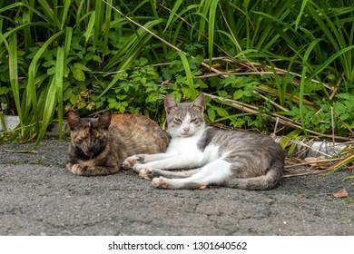 Pair of stray street cats sleeping on sun. Two pussycat resting in summer garden
