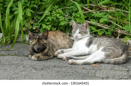 Pair of stray street cats sleeping on sun. Two pussycat resting in spring garden