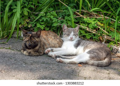 Pair of stray street cats sleeping on sun. Two pussycat in summer sun light garden