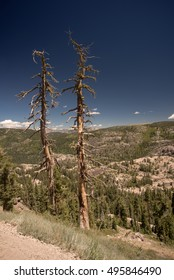Pair of trees and large vista