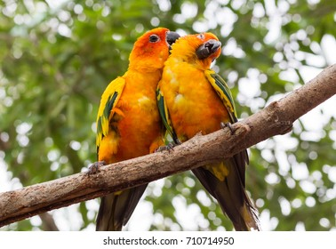 pair of two lovebirds. meaning of care, love, sex.