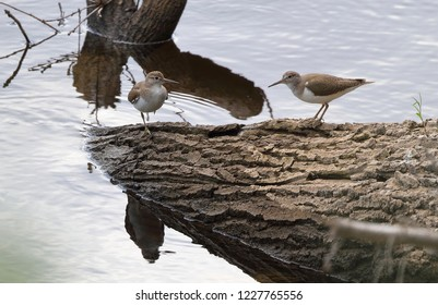 A pair of waders stand on a tree that has fallen into a river, reflected in the water.