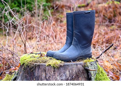 a pair of wellingtons standing on a treestump
