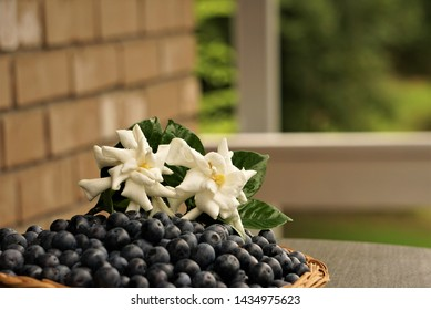 A pair of white gardenia flower (Gardenia jasminoides) is on the basket of soft focus ripe blueberries on the table at terrace of the house with blurred garden as the background , Summer in GA USA.