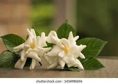 A pair of white Gardenia flower (Gardenia jasminoides) is on the wooden table at the terrace with blurred garden as the background , Summer in Georgia USA.