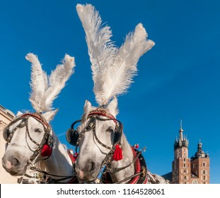 Pair of white horses with the Saint Mary's Basilica in the background in the historic center of Krakow, Poland on a beautiful sunny day