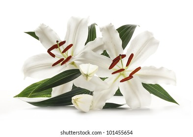 Pair of white lilies popular at weddings and funerals, isolated on a white background
