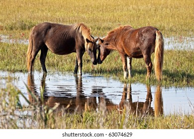 A pair of wild horses touching noses