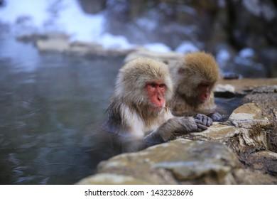 A pair of wild Japanese Snow monkeys  are in the state of ZEN in natural hot springs in the snowy mountain in Jigokudani, Nagano, Japan