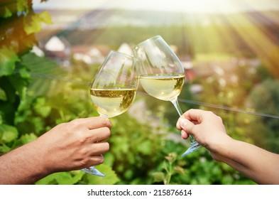 Paradies für Weingläser auf Weinbergen in Rheinau, Schweiz