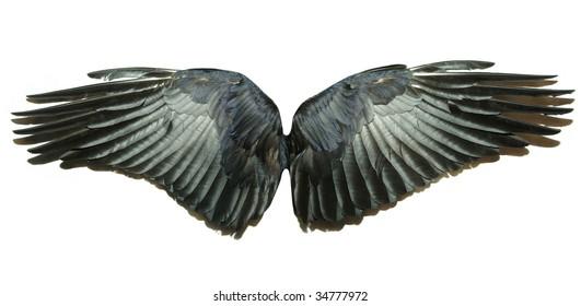 Pair of wings