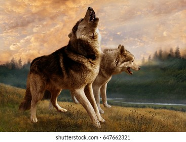 A pair of wolves