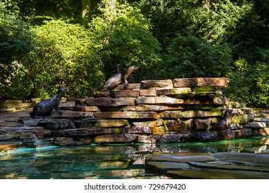 A pair of young fur seals on a beautiful stone hill in front of an artificial water in the Zoo. Germany .The city of Dortmund 07.2017
