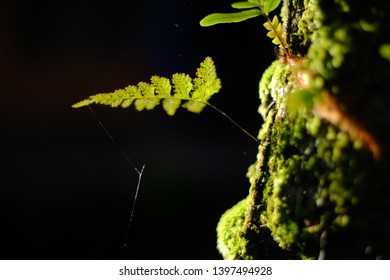 Pakis or fern is a member of a group of vascular plants (plants with xylem and phloem) that reproduce via spores and have neither seeds nor flowers