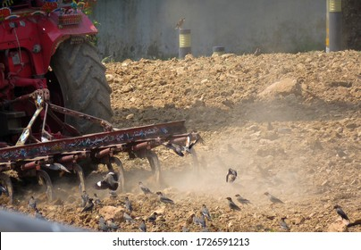 Pakistan, Islamabad - 09 May 2020 - Tractor is Ploughing In A Field and Birds Eating Insects From Mud