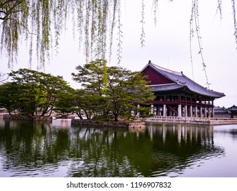 Palace of Korea,Korean Wooden Roof with cherry blossoming and pine trees on white background,Gyeongbokgung Palace in Seoul city, South Korea.